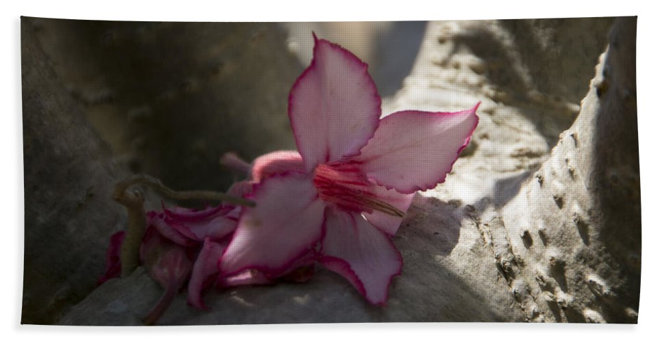 Flower Hand Towel featuring the photograph A Touch Of Pink V2 by Douglas Barnard
