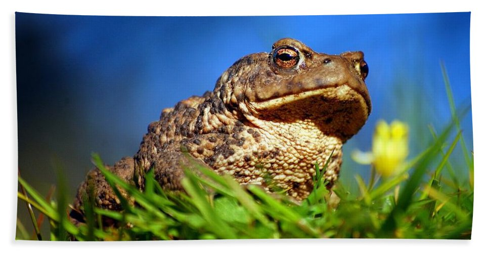 Common Toad Hand Towel featuring the photograph A Worm's Eye View by Gavin Macrae
