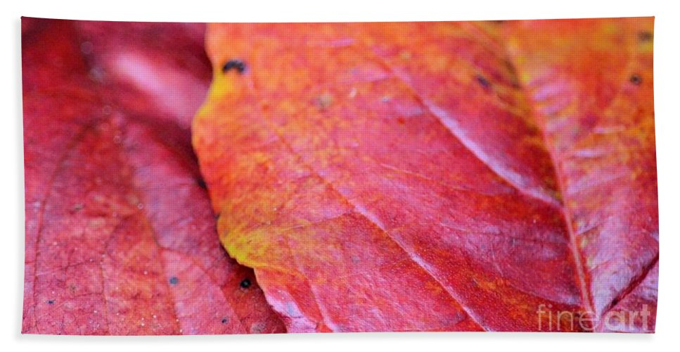 Abstract Dogwood In Autumn Hand Towel featuring the photograph Abstract Dogwood In Autumn by Maria Urso