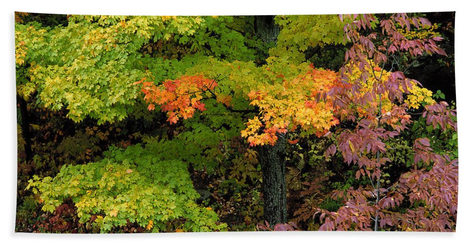 Adirondack Bath Sheet featuring the photograph Adirondack Autumn by Mike Nellums