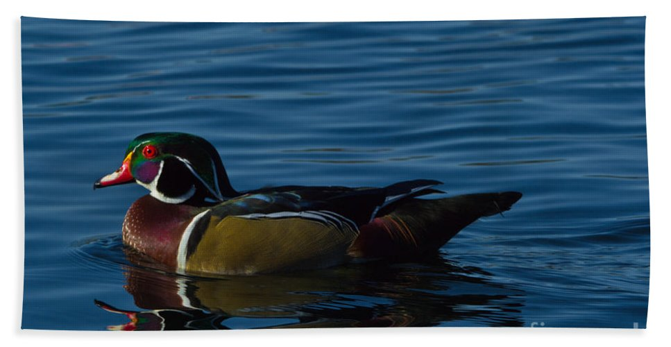 Adult Hand Towel featuring the photograph Adult Male Wood Duck by Scott Hervieux
