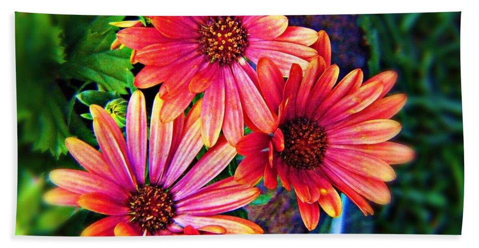 Flower Bath Sheet featuring the photograph African Daisy by Deahn   Benware