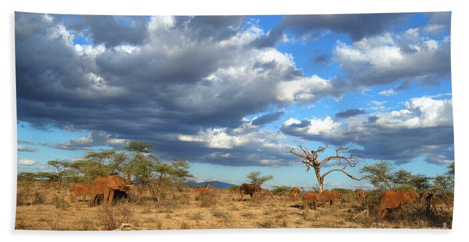 African Elephant Bath Sheet featuring the photograph African Elephant by Amir Paz