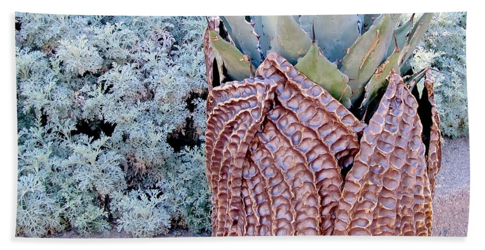 Agave Plant Hand Towel featuring the photograph Agave Blues by Marilyn Smith