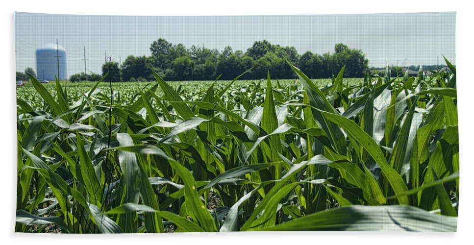 Corn Hand Towel featuring the photograph Alabama Field Corn Crop by Kathy Clark