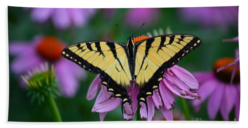 Color Photography Hand Towel featuring the photograph All Fanned Out by Sue Stefanowicz