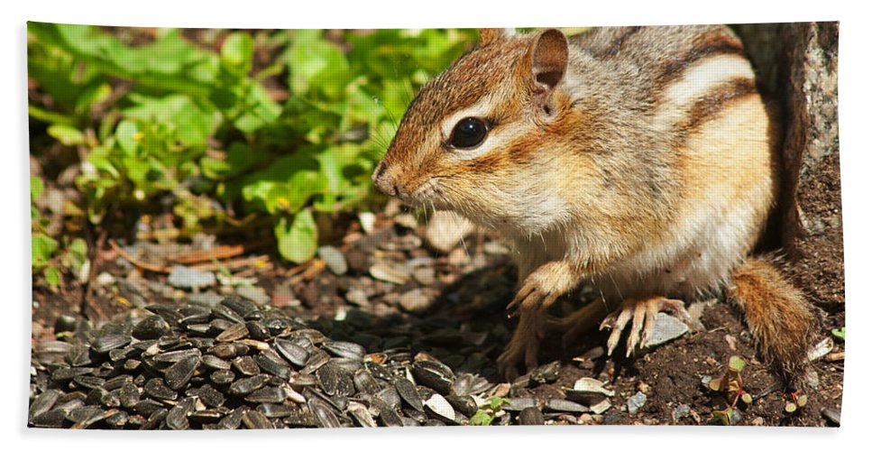 Chipmunk Bath Sheet featuring the photograph All For Me by Jeff Galbraith