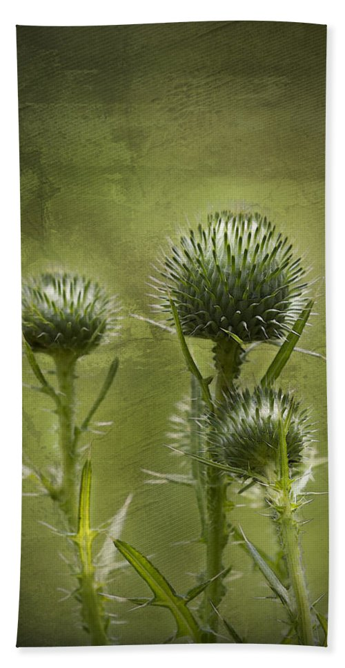Bull Thistle Hand Towel featuring the photograph All Prickles And Stings by Kathy Clark