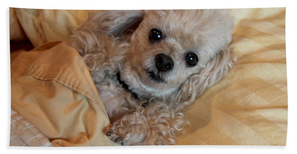 Dog Bath Sheet featuring the photograph All Tucked In by Diana Haronis