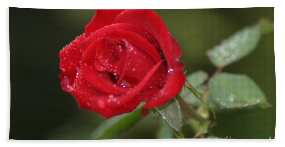 Roses Bath Sheet featuring the photograph All You Need Is Love by Living Color Photography Lorraine Lynch