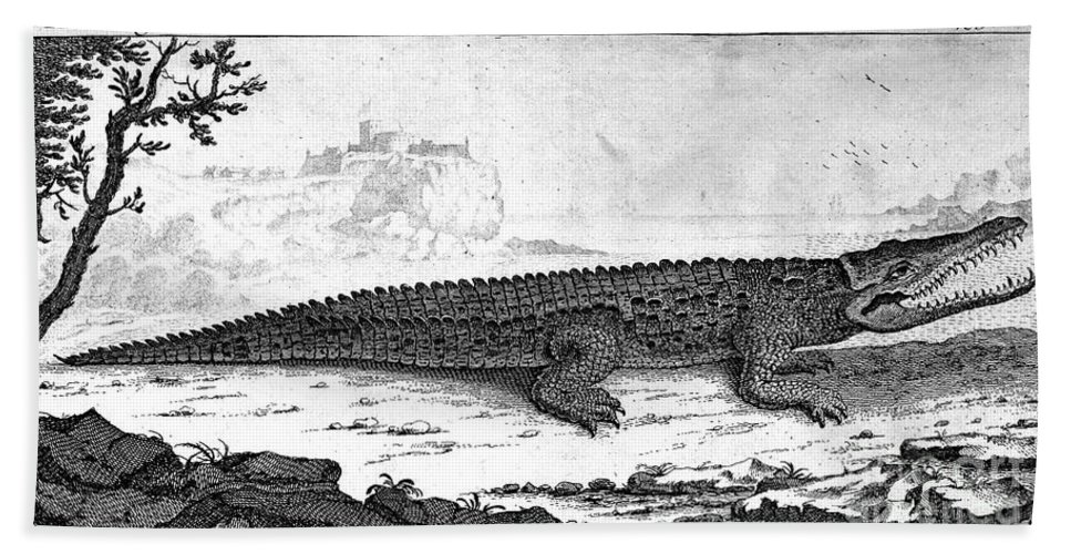 1752 Bath Sheet featuring the photograph Alligator by Granger