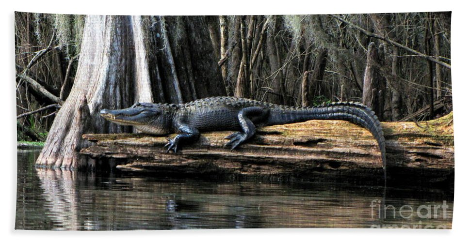 American Alligator Bath Sheet featuring the photograph Alligator Sunning by Barbara Bowen