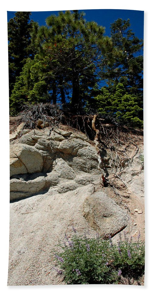 Usa Hand Towel featuring the photograph Alpine Pine Hangs On For Life by LeeAnn McLaneGoetz McLaneGoetzStudioLLCcom