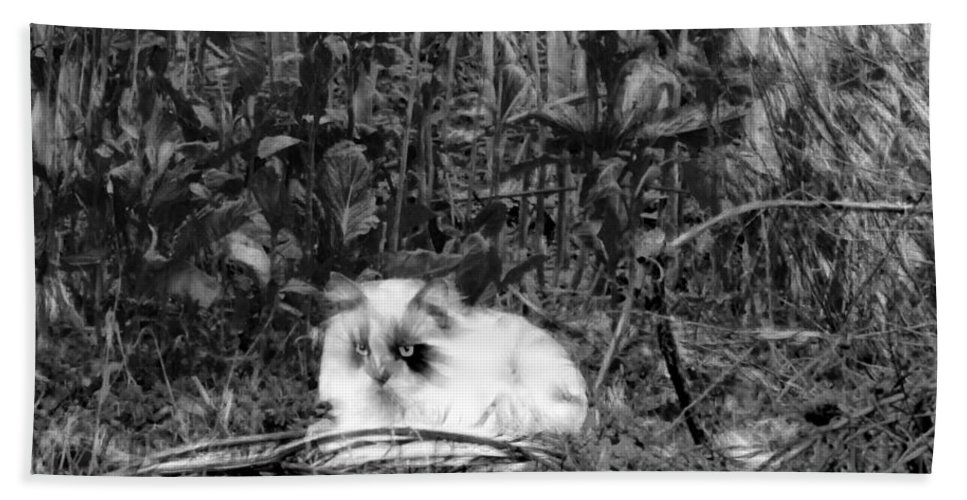 Tn Hand Towel featuring the photograph Always Hunting B-w by Ericamaxine Price