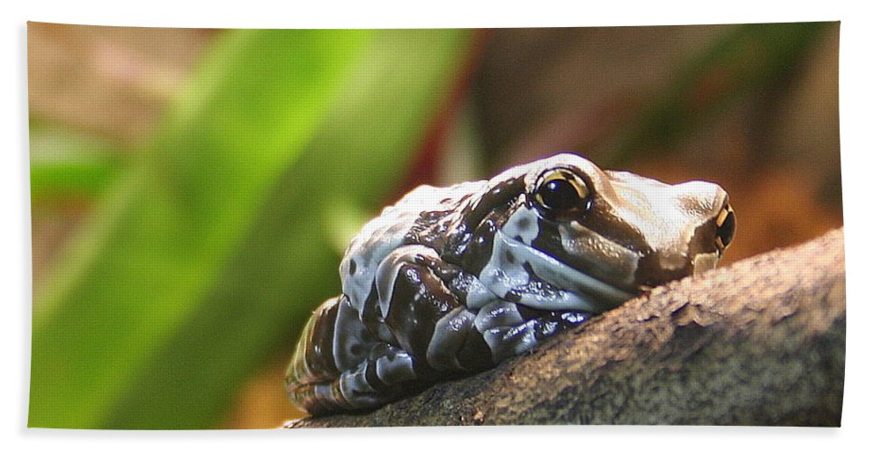 Amazon Milk Frog Bath Sheet featuring the photograph Amazon Milk Frog by Laurel Talabere