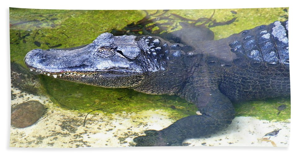 Nature Bath Sheet featuring the photograph American Alligator by Henrik Lehnerer