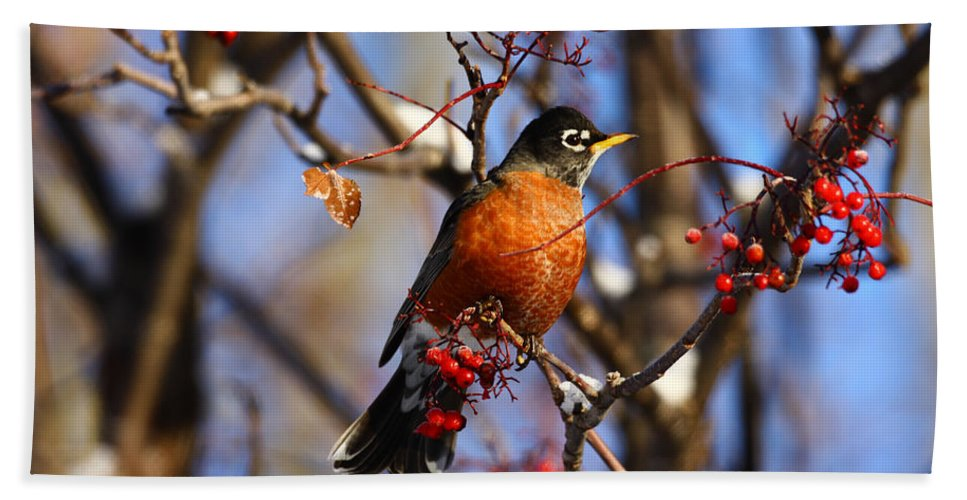 Alaska Hand Towel featuring the photograph American Robin by Doug Lloyd
