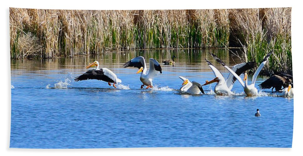 Pelicans Hand Towel featuring the photograph American White Pelicans by Greg Norrell