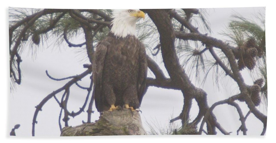 Eagle Bath Sheet featuring the photograph An Eagle Perched by Jeff Swan