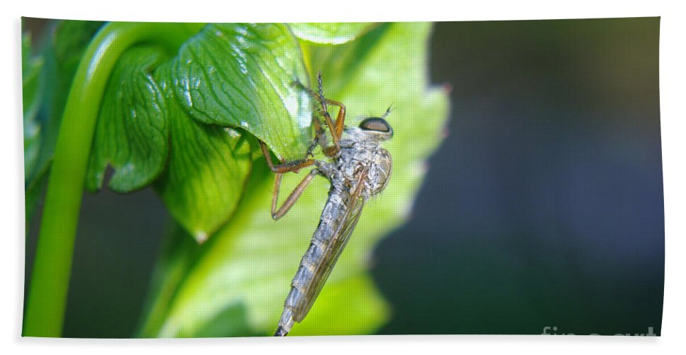 Insect Bath Sheet featuring the photograph An Insect Resting by Jeff Swan