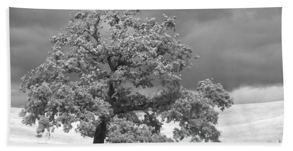Oak Bath Sheet featuring the photograph Ancient Oak by Jim And Emily Bush