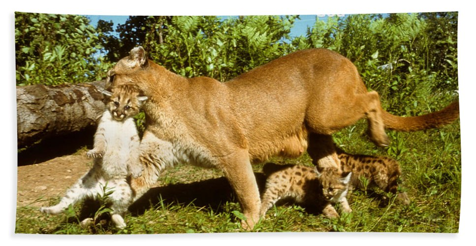 Cougar Bath Sheet featuring the photograph And Bring The Children by Larry Allan