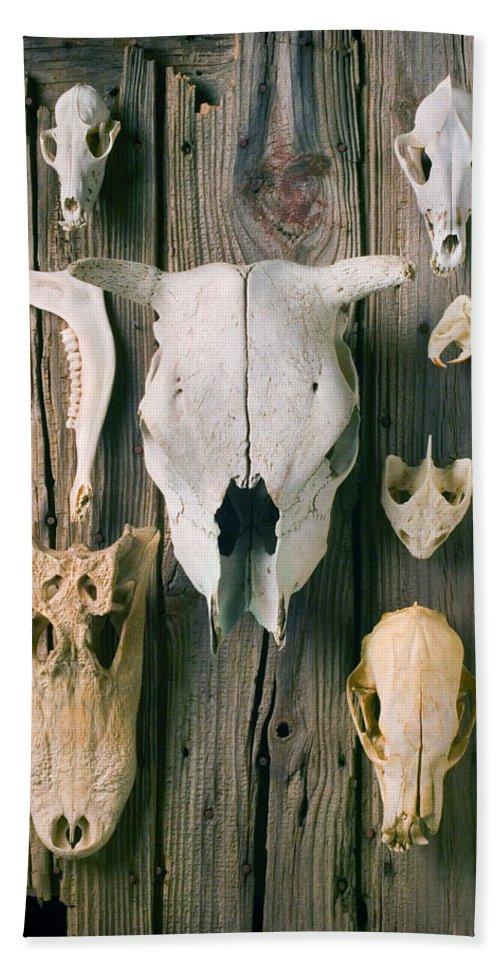 Skull Bath Sheet featuring the photograph Animal Skulls by Garry Gay