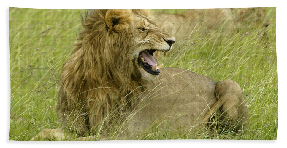 Africa Hand Towel featuring the photograph Annoyed by Michele Burgess