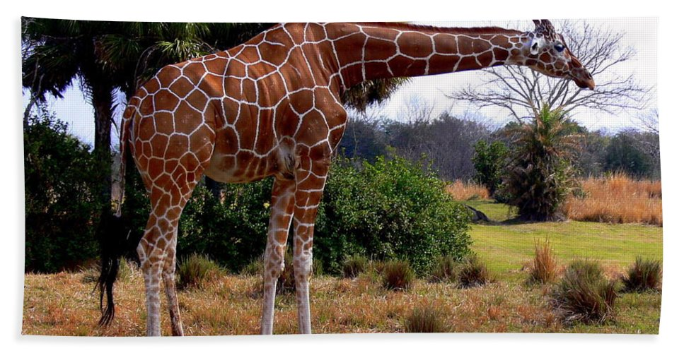 Jungle Bath Sheet featuring the photograph Another Neck by Kevin Fortier