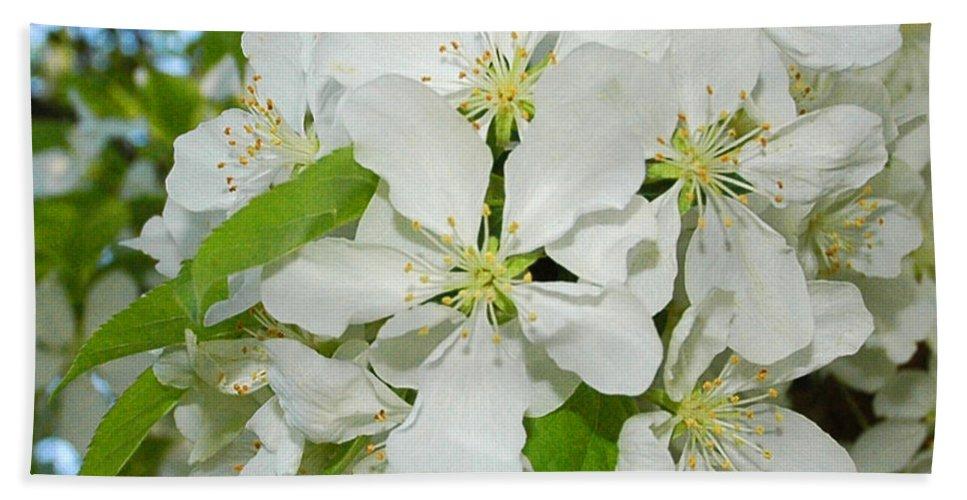 Usa Bath Sheet featuring the photograph Apple Blossoms On The Trail by LeeAnn McLaneGoetz McLaneGoetzStudioLLCcom