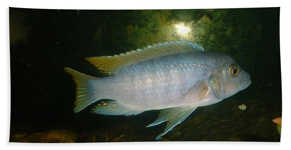 Fish Hand Towel featuring the photograph Aquarium Life by Bonfire Photography