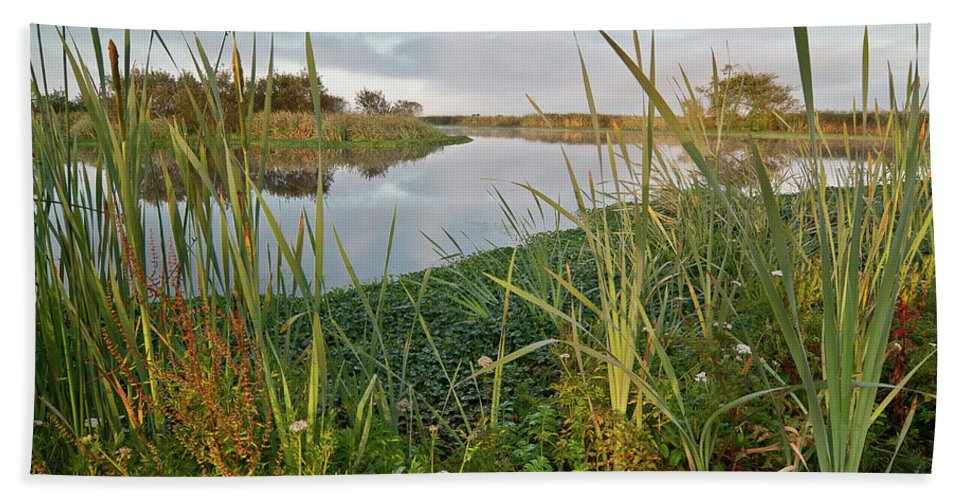 Landscape Bath Sheet featuring the photograph Arcata Marsh by Greg Nyquist
