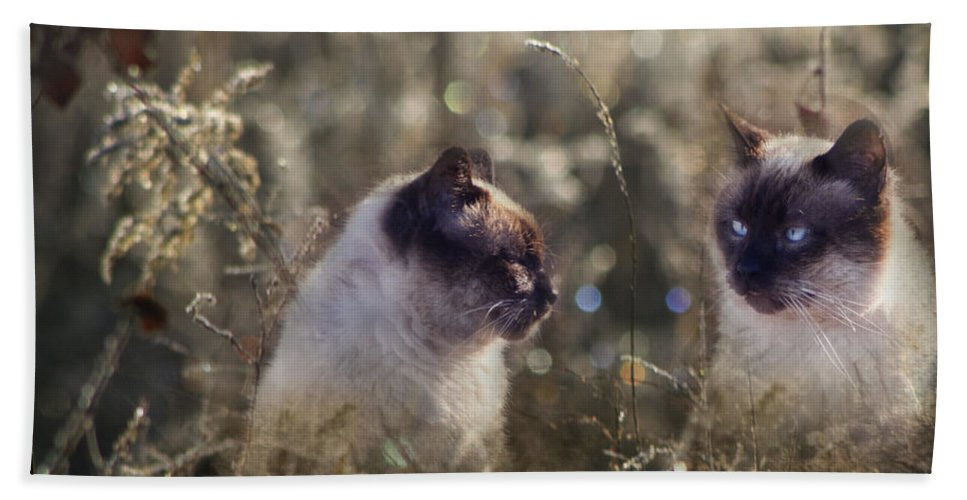 Siamese Bath Sheet featuring the photograph Are You Dreaming About Me - Siamese Feral Cat by Kathy Clark