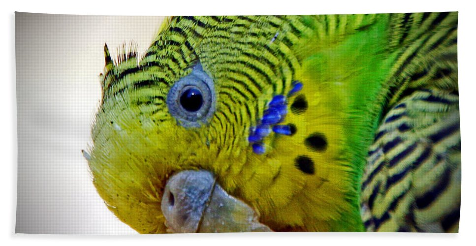 Parakeet Hand Towel featuring the photograph Are You Following Me by Rebecca Morgan