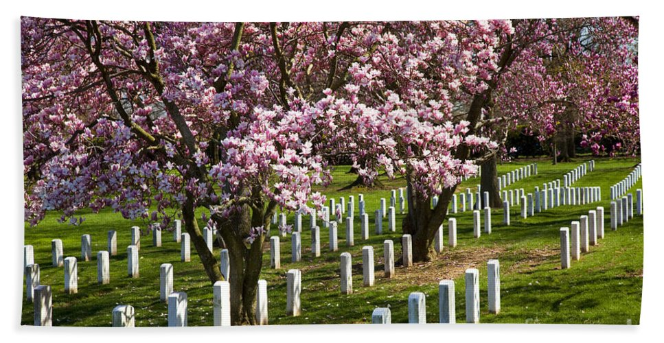 Blossoms Hand Towel featuring the photograph Arlington Cherry Trees by Brian Jannsen
