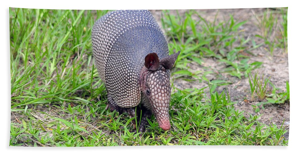 Armadillo Bath Sheet featuring the photograph Armored Armadillo 01 by Al Powell Photography USA