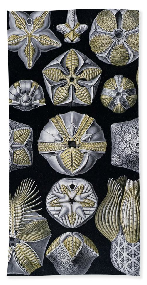 Blastoidea Bath Sheet featuring the painting Artforms Of Nature by Ernst Haeckel