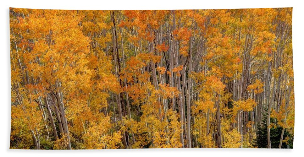 Aspen Hand Towel featuring the photograph Aspen Forest In Fall - Wasatch Mountains - Utah by Gary Whitton