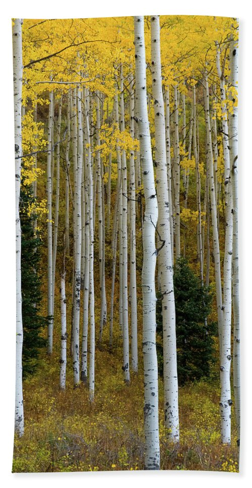 Colorado Bath Sheet featuring the photograph Aspen Trunks by Steve Stuller