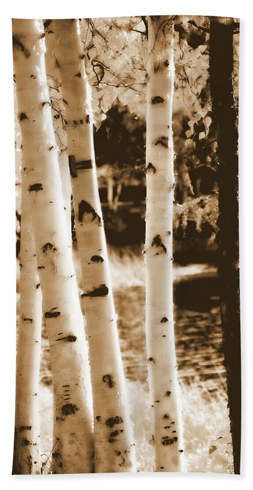 Chena Hand Towel featuring the photograph Aspens Llll by Kathy Sampson
