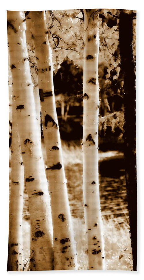 Chena Hand Towel featuring the photograph Aspens S L by Kathy Sampson