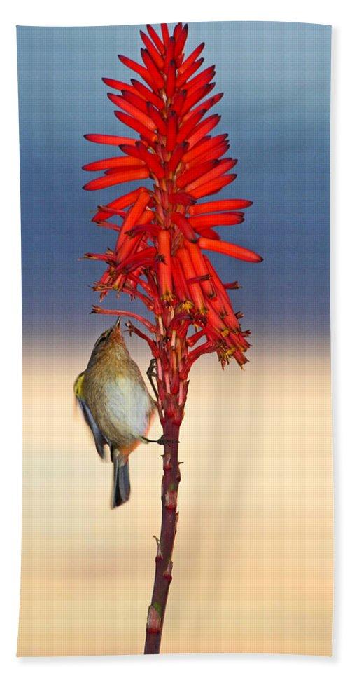 Bird Hand Towel featuring the photograph Atlantic Canary by Ralf Kaiser