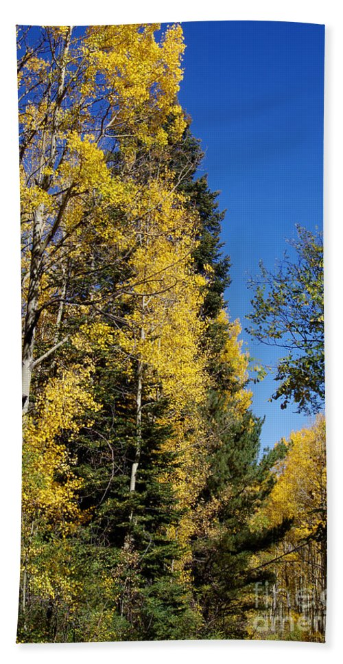 Photography Hand Towel featuring the photograph Autumn At Mcknight by Vicki Pelham