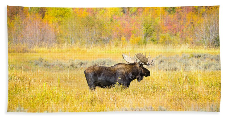 Grand Teton National Park Hand Towel featuring the photograph Autumn Bull Limited Edition by Greg Norrell