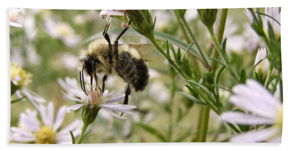 Bee Bath Sheet featuring the photograph Autumn Bumblebee And Flowers by Angie Rea