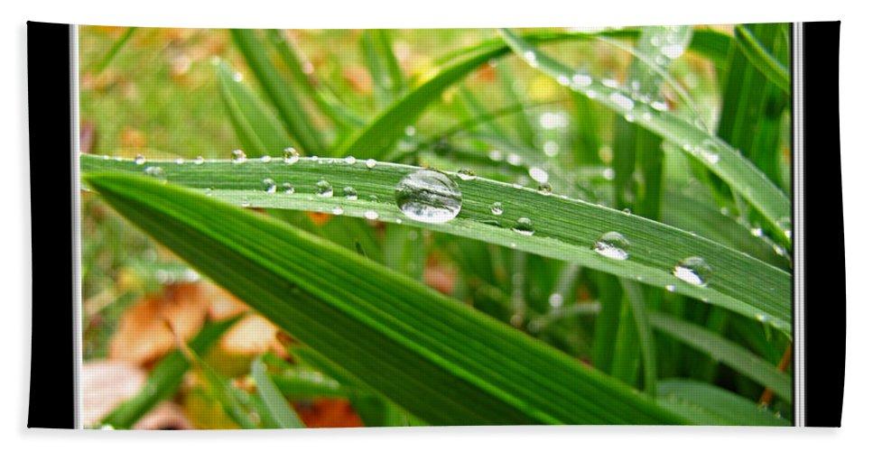 Nature Bath Sheet featuring the photograph Autumn Drops by Debbie Portwood