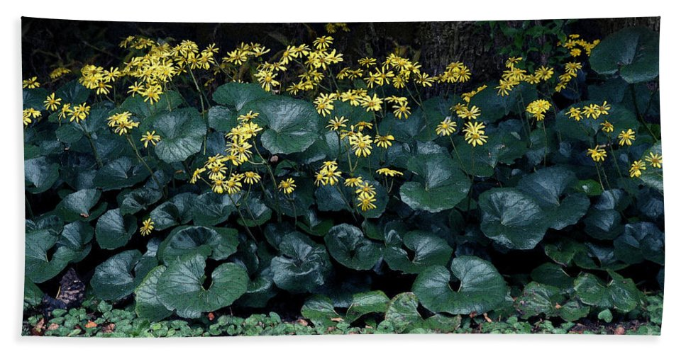 Flowers Bath Sheet featuring the photograph Autumn Flowers by Eena Bo