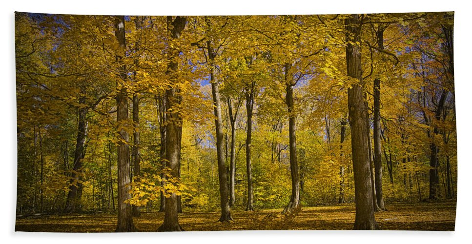 Art Bath Sheet featuring the photograph Autumn Forest Scene In West Michigan No.1140 by Randall Nyhof