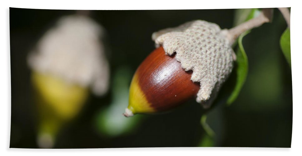 Menorca Hand Towel featuring the photograph autumn fruits - Mediterranean acorn macro by Pedro Cardona Llambias