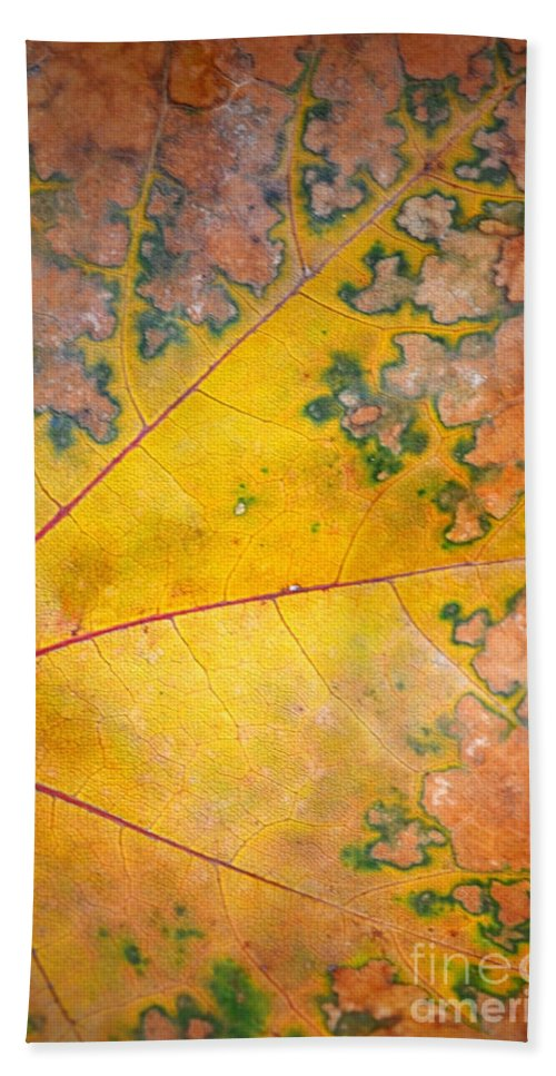 Leaf Bath Sheet featuring the photograph Autumn Leaf Abstract by Tara Turner